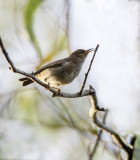 018__woodland_and_other_local_birds