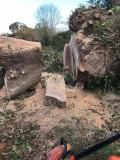 281 big oak.jpg