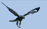 Fåglar & andra djur