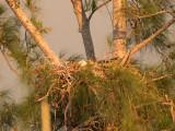 the nest across the street in golden light