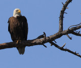 i have so many eagle photos I don't know what to do with all  of them