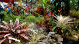 Pacific Orchid Exposition 2017 in San Francisco