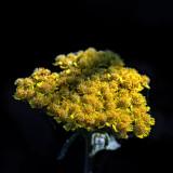 2018 Flowers