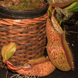 2018 Pacific Orchid Exposition Show