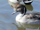 Reifel Bird Sanctuary