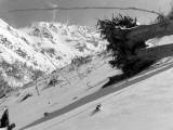 Vallon de Gabardères : arbre déraciné par le souffle d'une avalanche