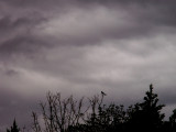 3-9-22017 The Rain Cometh  2.