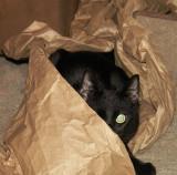 Rescued Black Kitten