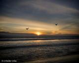 Sunset 12-31-17 Seagulls (2) Vign.jpg