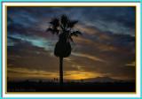 Sunrise Palms 4-26-17 (5) Vign F 2.jpg