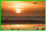 Sunset 1-17-18 (5) Gulls Frame.jpg