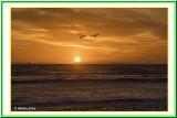 Sunset HB 1-25-18 (13) Gulls VG Frame2.jpg