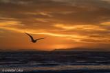 Sunset HB 1-25-18 (21) Gull.jpg