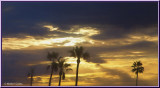Sunrise Palms 2-20-18 (3) My WC.jpg