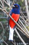 Argentina Birds