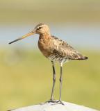 Birds & Nature Holland and Belgium