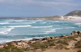 Cape Peninsula and Table Mountain NP