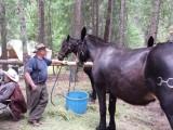 One BIG pack mule!.jpg