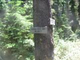 64 - Meadow Ck. Trail.jpg