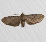 7445-7648 : Eupithecia, Lithostege