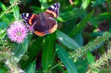 Insects, Butterflies etc.