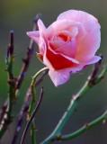 flowers_and_flower_macros_________________