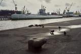 Submarine C189, Harbor