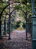 Upper garden. Autumn