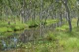 wet-season stream