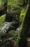 ferns & more
