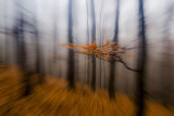 zoomed forest 2