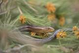 Reptiles&Amphibian