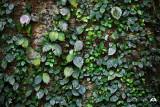 Jungle Pollock