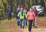 Wandern von Lanzenkirchen nach Wiesen, 26. Oktober 2017