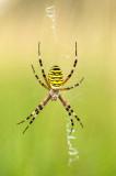 Spinnen/Spiders