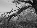 Trees in Shades of Grey