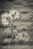 Spring in the Mojave Desert