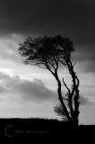 A tree at Horns Cross