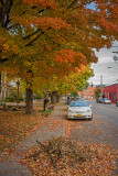 Franklin Autumn Street Scene