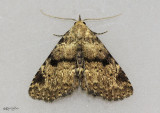 moths 6 Tussock 8033 - 8879
