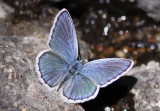 Blue Copper