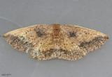 moths 4 Geometers 6076 - 7181