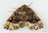 moths 4 Geometers 6076 - 7181