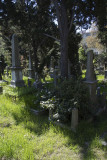Istanbul Protestant Cemetery march 2017 3675.jpg