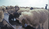 Urfa 1997 Desert tour 114.jpg