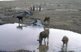Urfa 1997 Desert tour 098.jpg