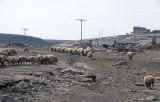 Urfa 1997 Desert tour 132.jpg