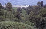 Rize Tea country 2002 120.jpg