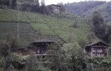Rize Tea country 2002 150.jpg
