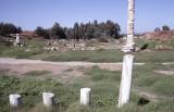 Selcuk Artemis temple 92 006.jpg